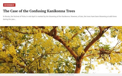The Case of the Confusing Kanikonna Trees