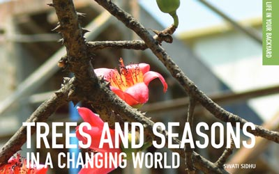 Trees and seasons in a changing world