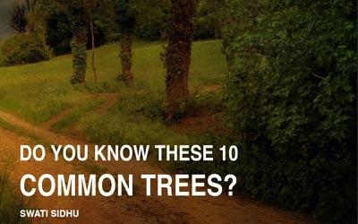 Booklet of ten common trees