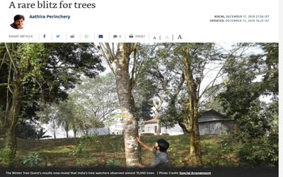A rare blitz for trees