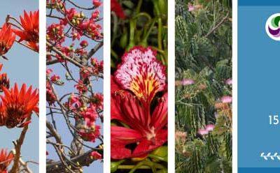 Spring Festival Report – 2020