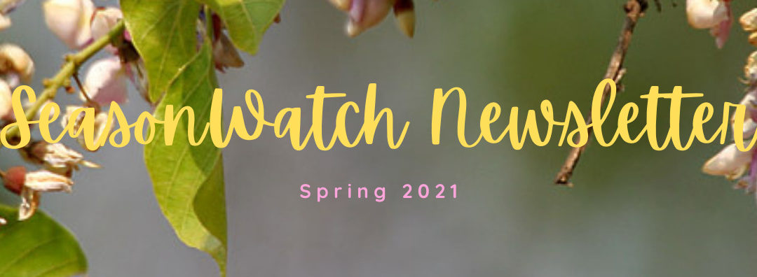 SeasonWatch News, April 2021